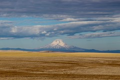Mount Hood in the background