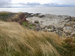 Sully Island i (Dugswell2) Tags: sullyisland p21 tidalisland siblet caton wales