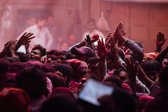 Praying to Idols in Shri Banke Bihari Mandir (AdamCohn) Tags: abeer adamcohn bankebiharimandir hindu india shribankeybiharimandir vrindavan gulal holi pilgrim pilgrimage अबीर गुलाल होली