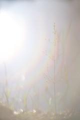 Softly spoken . (look to see) Tags: bokeh soft rainbow flare softfocus mood projectionlens vintagelens bellhowell16mmprojectionlens100mmf22 delaak beek bree belgium 2018