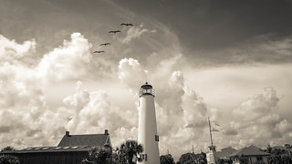 PELICANS OVER THE LIGHTHOUSE