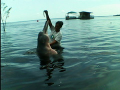 Swimming with Boto (tim ellis) Tags: rionegro amazoncruise iracema holiday dolphin riverdolphin pinkriverdolphin boto iniageoffrensis manaus brazil