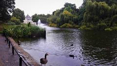 Esős délután a St. James Parkban (London, Anglia) (milankalman) Tags: rain pond park