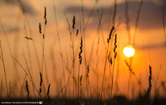 The end of a summer day. (andreasheinrich) Tags: nature fields meadow grass summer evening sunset july warm colorful germany badenwürttemberg neckarsulm dahenfeld deutschland natur felder wiese gras sommer abend sonnenuntergang juli farbenfroh nikond7000