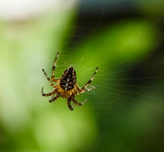 Do you love me or do you hate me? (**Karin**) Tags: love hate netz spinne web spider