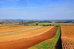 landscapes of Lower Silesia (JoannaRB2009) Tags: lowersilesia dolnyśląsk polska poland nature landscape view fields summer sunny weather corn tractor horizon rural cultivated goldenfields