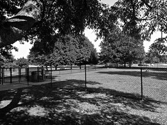 The Dog Park (B&W) (neukomment) Tags: bw blackwhite parks michigan august 2018 summer dogs android