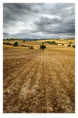 Autumn (John Joslin) Tags: autumn field trees landscape sky clouds overcast soil dirt cultivated agriculture ploughed hill