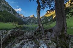 Seealpsee (Giuseppe Caponio) Tags: landschaft moos see steine wald wasser weissbad kantonappenzellinnerrhoden schweiz ch