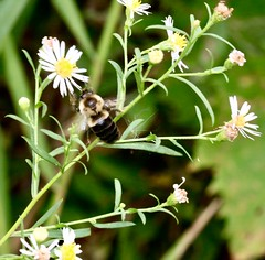 Bugs (REGOR NOTPUL) Tags: bugs insects spiders bees crane flies glenburnie ontario