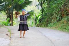 donna-area-montuosa-Vac-tour (Vactours Vietnam) Tags: viaggioinvietnam trekking giroapiedi vactours vietnam