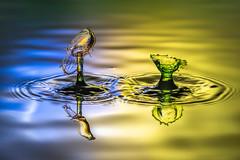 Splash-4 (Harry Sterken) Tags: dropletondroplet highspeedphotography splash splashphotography tat trobfen trobfenfotografie tropfenauftropfen water waterdroplets waterdruppels watersplash