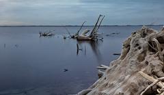 Esqueletos de Madera (::Daniel::) Tags: carhue laguna epecuen buenos aires argentina canon7dmarkii sigma1835