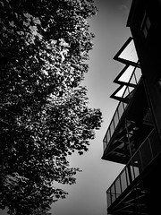 rnor81040.jpg (Robert Norbury) Tags: fuckit somearelandscapessomearenot icantbearsedkeywording fineartphotography blackandwhite photographer itdoesntmatterwhattheyarepicturesoftheyarejustpictures itdoesntmatterwhattheyarepicturesoftheyarejustpictur