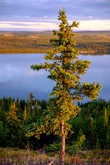 That golden light.... (Kristaaaaa) Tags: fujixt2 fujifilm lutselke canada eastarm greatslavelake lake north northern northwestterritories nwt