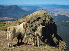 Peña Oroel (Teresa Esteban) Tags: roca cabra montaña peñas jaca huesca aragón españa europa pirineo paisaje