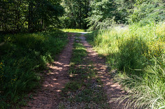 Pennell road - 2 (MarksPhotoTravels) Tags: bluewallpreserve greenvillecounty southcarolina