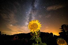 Here comes the stars.  #canonespaña #nighttime #picoftheday #photooftheday #longexposure #largaexposicion #spain #noche #estaesmivision #canon6dmarkii #stars #cielo #spain #night #sunflower #longexposure #lightpainting #galaxy #landscape #instagood #night (JavichuPhoto) Tags: photooftheday canonespaña spain milkyway clouds nighttime nightscape galaxy missyou instagood vialactea longexposure cielo night largaexposicion stars lightpainting sunflower estaesmivision canon6dmarkii picoftheday girasoles liveforthestory noche landscape