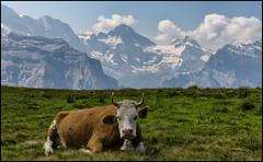 _SG_2018_08_0000_IMG_9381 (_SG_) Tags: schweiz suisse switzerland alps bernese männlichen cantone berne mountain berg lauterbrunnen wengen aerial cableway oberland nature hiking