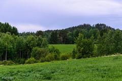 Vihreytta (nousku) Tags: mmp suomi finland sysmä landscape tamron