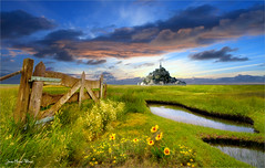 The pond (Jean-Michel Priaux) Tags: montsaintmichel abbey bretagne normandie church paysage nature painting paint hdr pond swamp marsh bog île isle plane flower campagne mattepainting paintmapping patrimony patrimoine france photoshop lumix g81 color pointofview