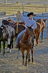 A cowboy in Cody (t.horak) Tags: cowboy horse gallop rope rodeo cody wyoming usa hat statson jeans blue guy man marlboro country