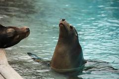 IMG_4326 (gabrielgs) Tags: holiday holiday2018 vakantie2018 camping frankrijk france zoo la fleche lafleche animals dierentuin loire