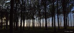 Nienhagen - 03091805 (Klaus Kehrls) Tags: gespensterwald nienhagen ostsee wald abendstimmung panorama bäume buchen