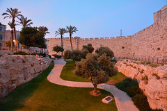 Jerusalem / National Park /  Blue hour (Pantchoa) Tags: israël jerusalem parc nationalpark pins arbres mur oliviers pelouse gazon chemin pierres ciel heurebleue palestine moyenorient procheorient
