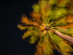 As noites de Icaraí (elzauer) Tags: icaraidaamontada cearastate ceará brazil night tropicalclimate palmtree starspace coconutpalmtree formalgarden sky agriculture backlit beautyinnature constellation environmentalconservation focusonforeground greencolor horizonoverland landscape milkyway nature nonurbanscene orangecolor outdoors outerspace photography plant selectivefocus shadow silence silhouette socialissues tranquilscene tree tropicalrainforest tropicaltree