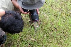 IMG_6165 (mohandep) Tags: hessarghatta lakes karnataka butterflies birding nature wildlife insects signs food