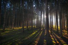 Some kind of magic... (der_peste (on/off)) Tags: forest raysoflight raysofgod godrays sunrays sunbeams crepuscularrays woods woodland light shadow trees treescape landscape