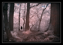 The Magical Forest (Fotogravirus) Tags: infrared ir720 forest magicalforest conceptualart art dark eerie creepy leaves sombre fairytale