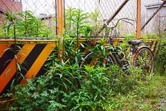 Nearly overgrown... (Eric Flexyourhead) Tags: nishinari nishinariku 西成区 osaka osakashi 大阪市 kansai 関西地方 japan 日本 city urban detail fragment bike bicycle charinko チャリンコ jitensha 自転車 green overgrown sonyalphaa7 zeisssonnartfe35mmf28za zeiss 35mmf28