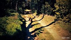 IMG_20180916_105524 (Željko V. Mitić) Tags: september outdoors nature naturephotography village countryside sunny sunnyday morning tree trees ladnscape landscapes landscapephotography