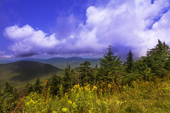 Shadowy (Steven Strasser) Tags: vermont blue yellow green forest wildflowers mountains sunny landscape