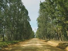 La estrella #sur #camino (Nicole Alejandra Ac) Tags: sur camino