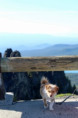 The dog on Paulina peak (daveynin) Tags: oregon newberry peak caldera