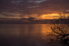 Lake Rotorua Sunrise #5 (Robert Borden) Tags: sunrise mist lakerotorua rotorua newzealand nz northisland 50mm 50mmlens fujifilmxt2 fujiphotography goodlight morninglight morning