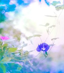Trespasser (Tomo M) Tags: 朝顔 morningglory nature bokeh park garden vine blur helios
