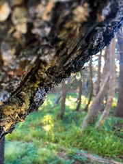 IMG_1285-2.jpg (Daniel Pouliot) Tags: highsierracamps backpacking sunrisehighsierracamp yosemite yosemitenationalpark highsierracamp wawona california unitedstates us