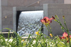Aga Khan Garden (mrwalli) Tags: garden islamic charbhag universityofalberta edmonton alberta agakhan ismaili muslim canada flower waterfountain fountain waterfall friendlychallenges