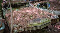 Old Car City 155 (augphoto) Tags: augphotoimagery abandoned auto automobile car decay old texture weathered white georgia unitedstates