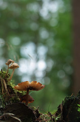 Fungi Photography (Visual Stripes) Tags: fungi fungus mushrooms mushroom forest nature bokehlicious bokeh depthoffield mzuiko 35mmmacro panasoniclumixg1 microfourthirds mft m43