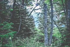DSC_0056 (Hilðr) Tags: mountains trees rocks forest woods view horizon canyon hills pine stones moss norse inspiration spirit hiking dark