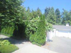 IMG_8354 (Andy E. Nystrom) Tags: bellevue washington wa bellevuewashington