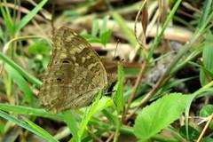 IMG_6149 (mohandep) Tags: hessarghatta lakes karnataka butterflies birding nature wildlife insects signs food