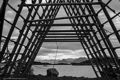 Stockfish (www.davidbaxendale.com) Tags: stockfish stock fish cod racks wooden lofoten islands norway travel photography