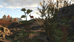 Looking Around (Mr. Pebb) Tags: deer uk united kingdom nature animal mammal stock stockshot morning scenery landscape landscapeformat landscapemode screencapture screenshot imagecapture 4k 4kgaming 4kimage 4kpicture 4kshot cloud clouds 3840x2160 british britain outside sky still stillshot stillimage stillpicture racinggame racegame forza fh4 forzahorizon4 playgroundgames turn10studios turn10 ms microsoftstudios microsoft xboxone xboxonex xbox videogamecapture videogame photomode tree rock