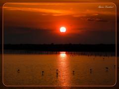 Ηλιοβασίλεμα με τα Φλαμίνγκο - Καλοχώρι Θεσσαλονίκη (Spiros Tsoukias) Tags: hellas ελλάδα ηλιοβασίλεμα ήλιοσ ουρανόσ σύννεφα φύση διακοπέσ μακεδονία greece sunset sun sky clouds nature holidays macedonia grece coucherdesoleil soleil ciel nuages vacances macedoine griechenland sonnenuntergang sonne himmel wolken natur ferien mazedonien grecia puestadelsol sol cielo nubes naturaleza vacaciones tramonto sole nuvole natura vacanze griekenland zonsondergang zon hemel natuur vakantie macedonie λιμνοθάλασσα καλοχώρι εθνικόπάρκο δέλτααξιού γαλλικόσ λουδίασ αλιάκμονασ θεσσαλονίκη water ποτάμια rivers πουλιά φλαμίγκο